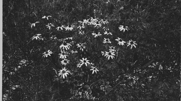 flower1alt-1